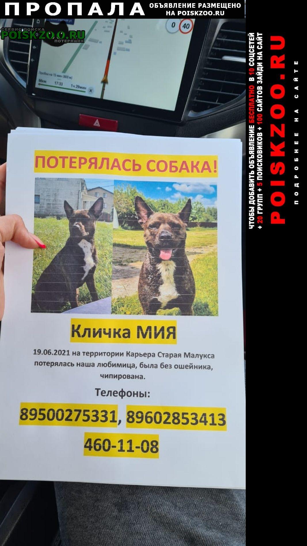 Пропала собака очень ждем домой. Санкт-Петербург