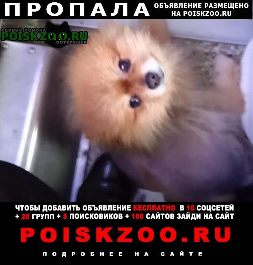 Пропала собака кобель Славянск-на-Кубани