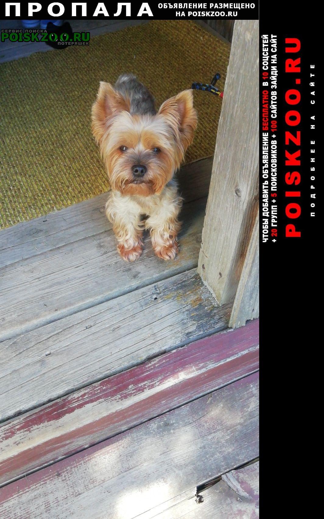 Пропала собака кобель йоркширский терьер Калуга