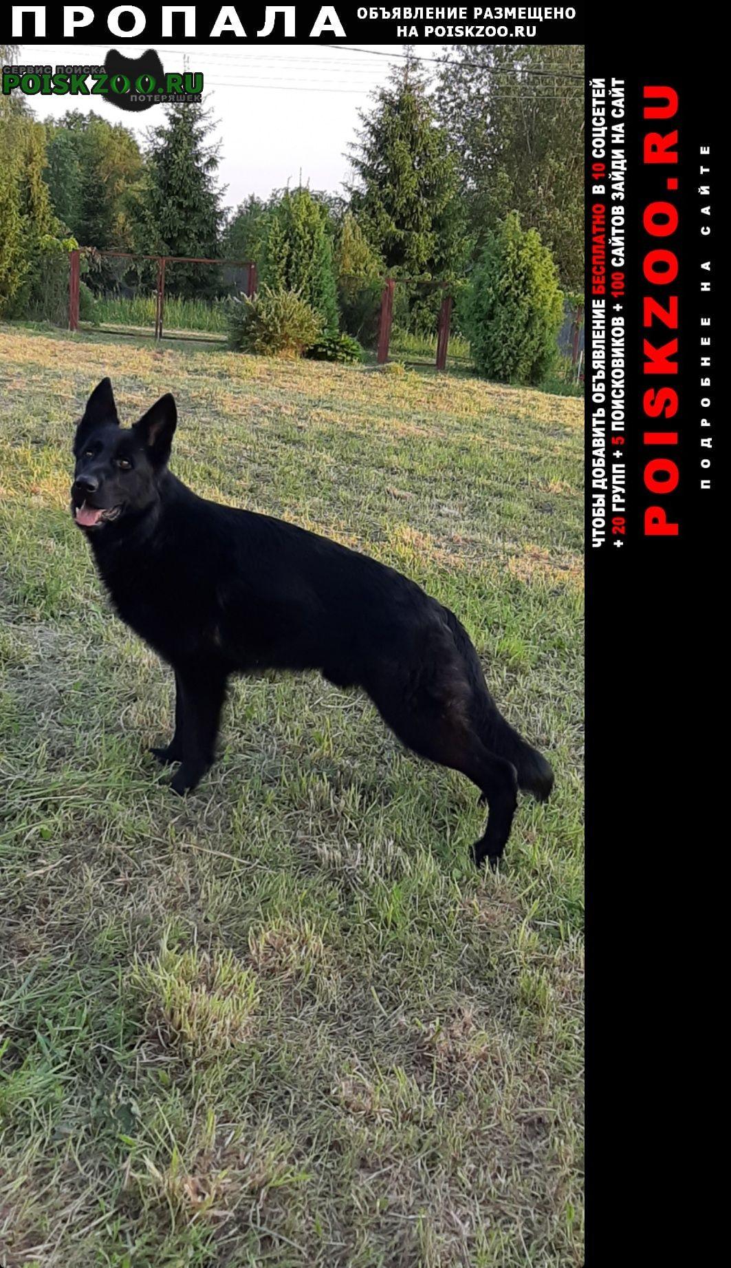 Пропала собака кобель. немецкая овчарка 2, 5года, черный. Икша