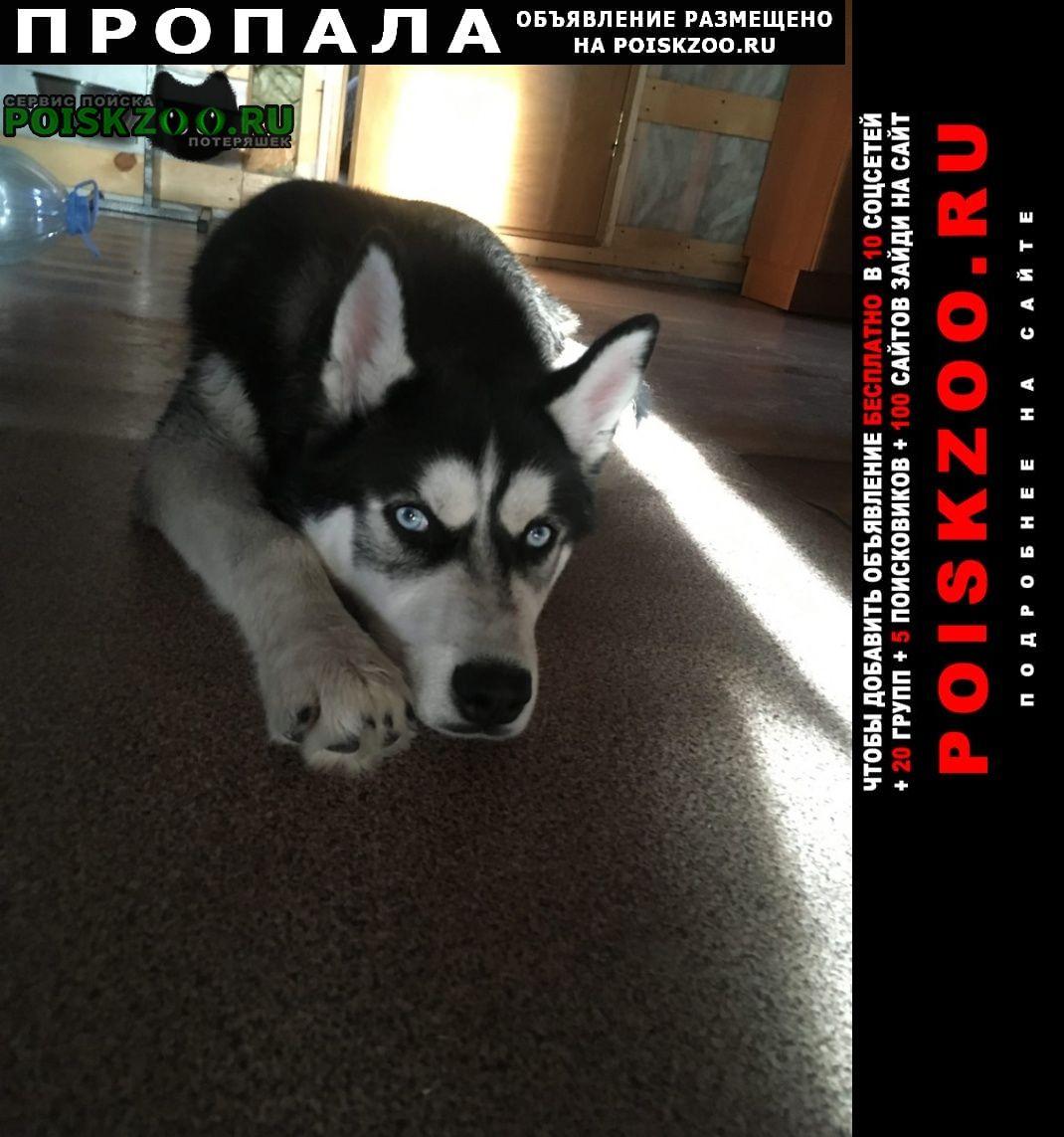 Пропала собака кобель https://vk.com/nutik_foto Коммунар