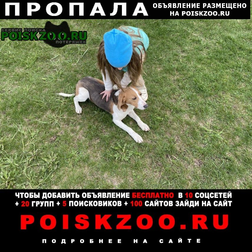 Пропала собака в ском р-не. эстонка Жлобин