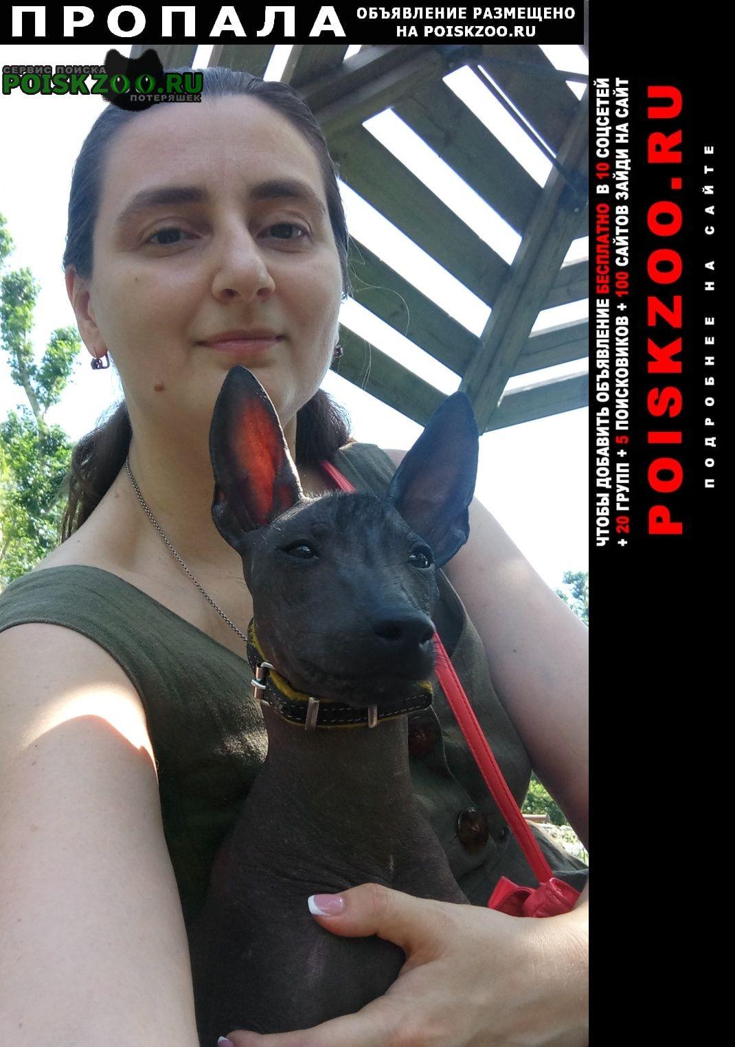 Пропала собака кобель мартин Москва