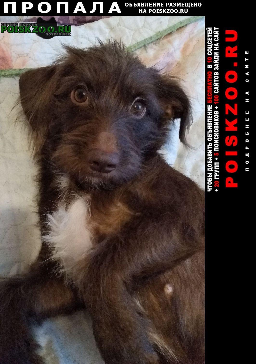 Пропала собака 13 июня менделеева 12 Омск