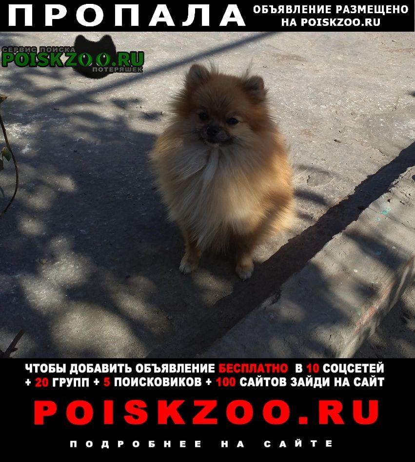 Пропала собака рыжая маленькая собачка. Бердск