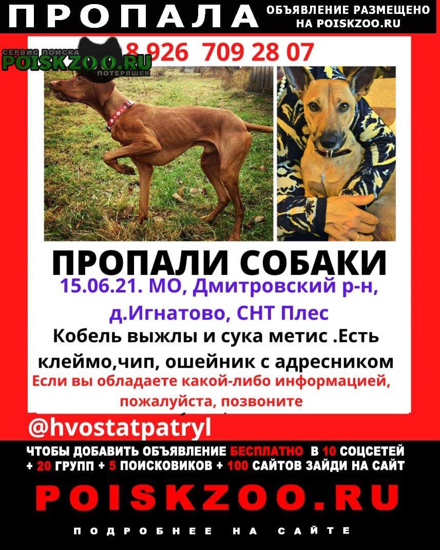 Пропала собака кобель вознаграждение Икша