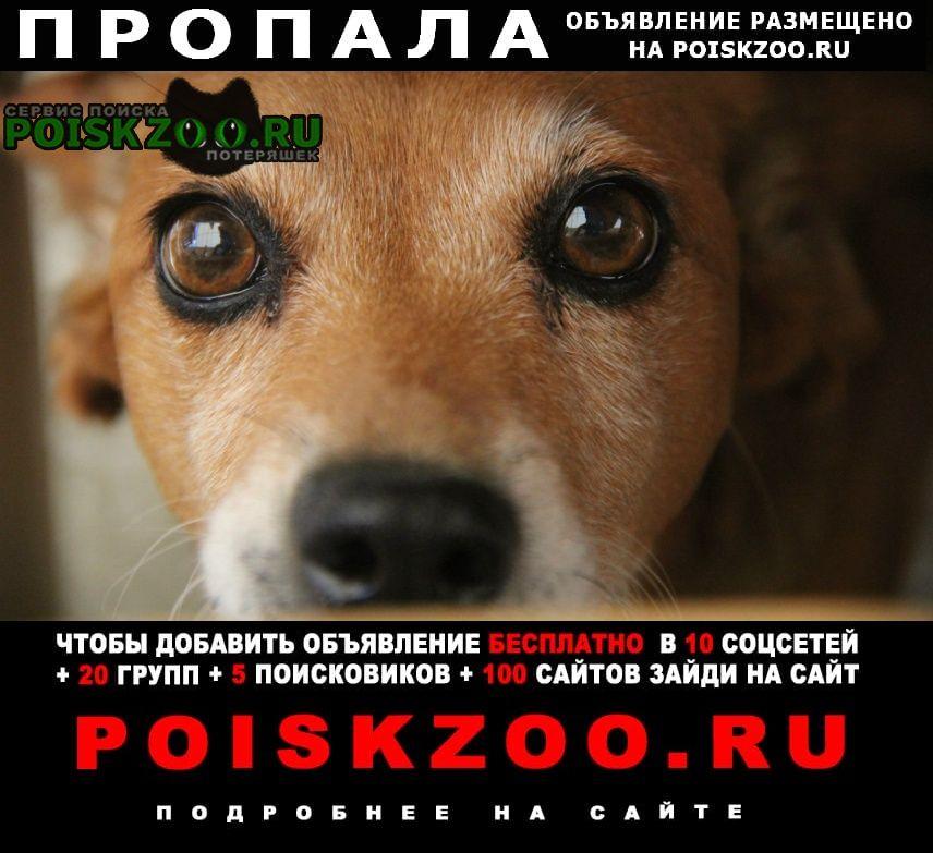 Пропала собака Черноморское