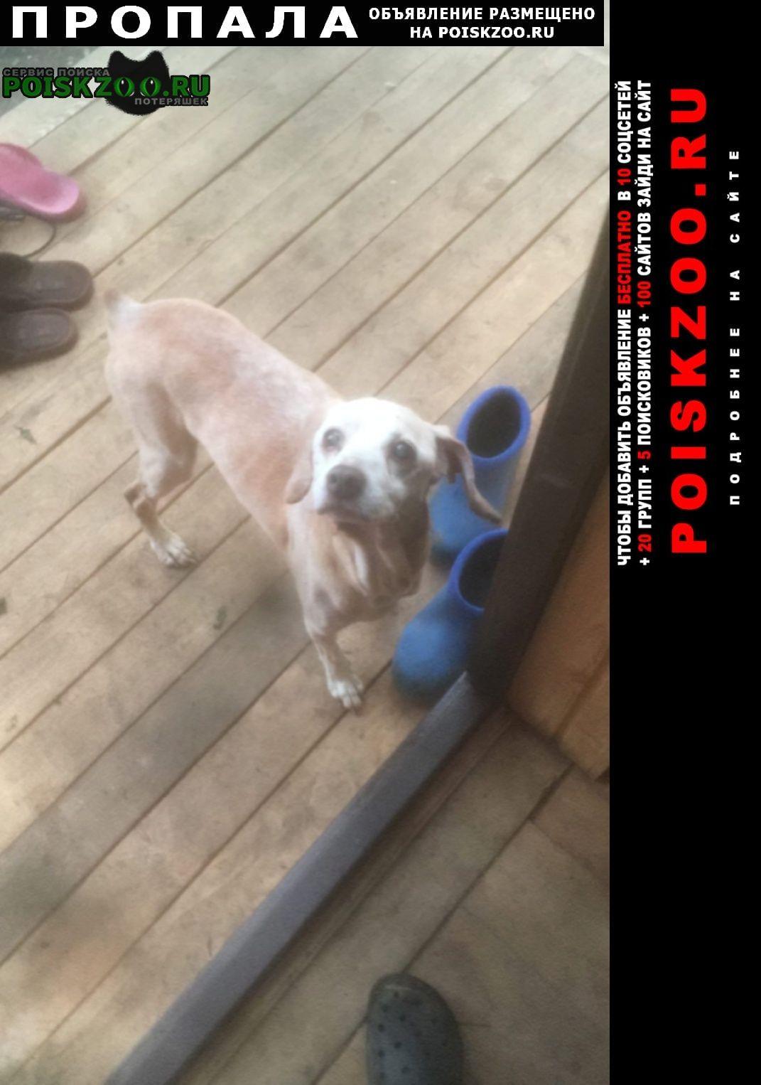 Пропала собака кобель любое вознаграждение Воскресенск