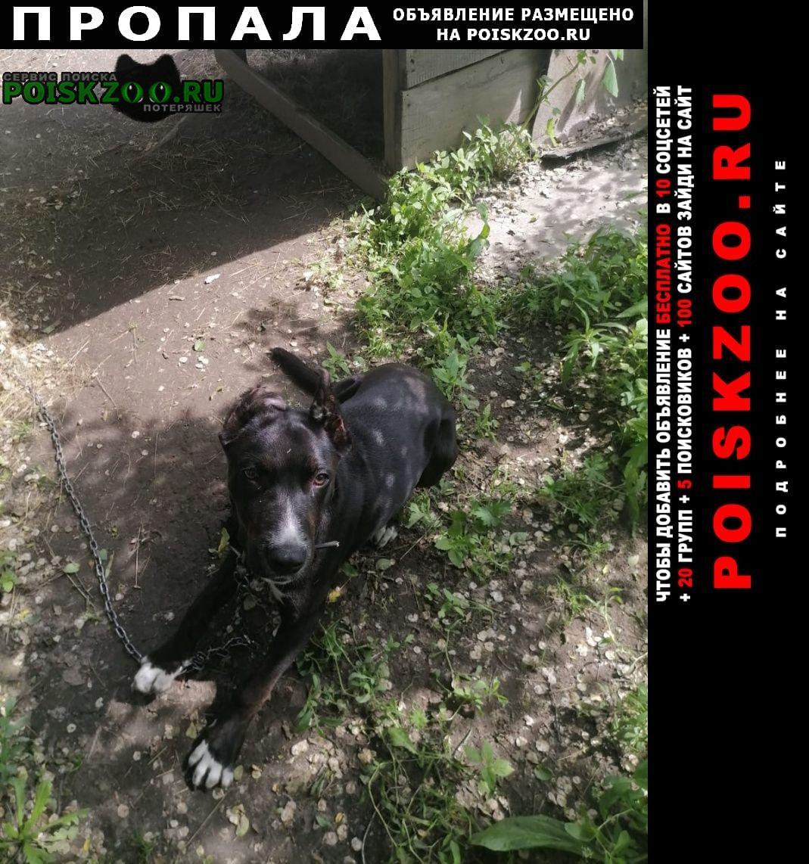 Пропала собака девочка стаф Хабаровск