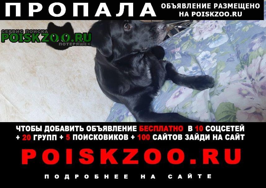 Пропала собака кобель просим помочь найти нам нашего друга Нижние Серги