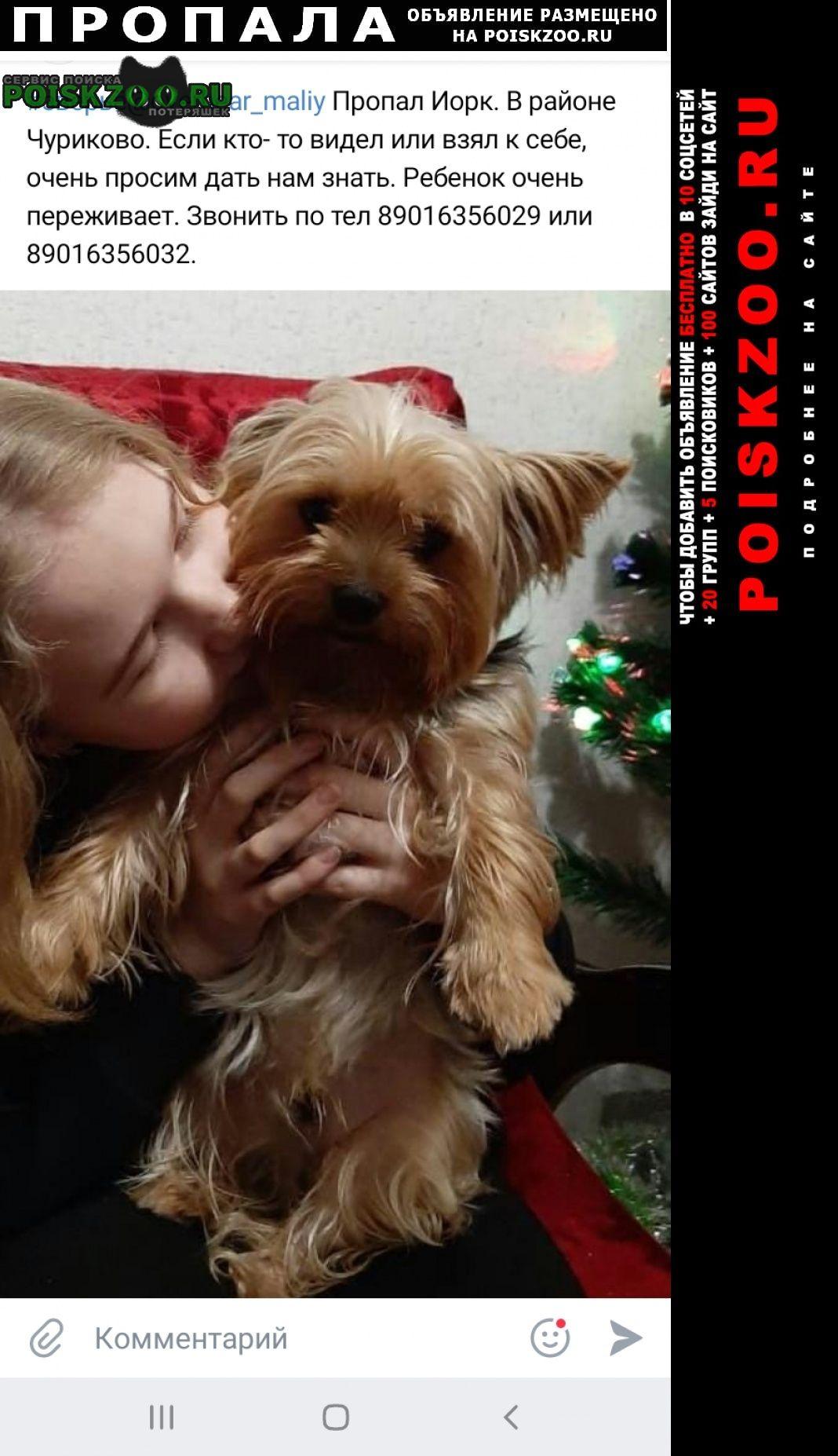 Пропала собака кобель Малоярославец
