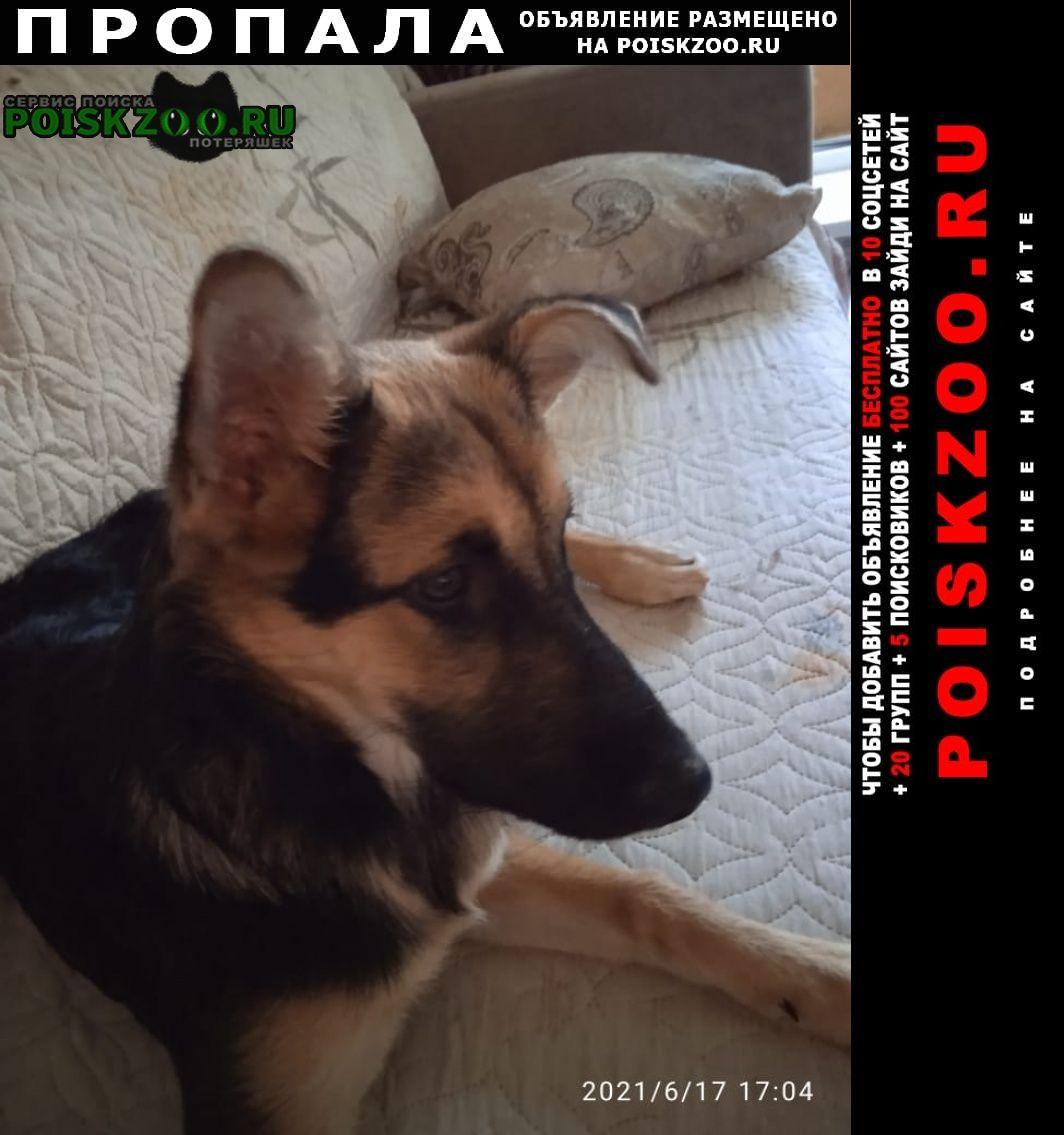 Пропала собака собачка джуля в онт ветеран Солнечногорск