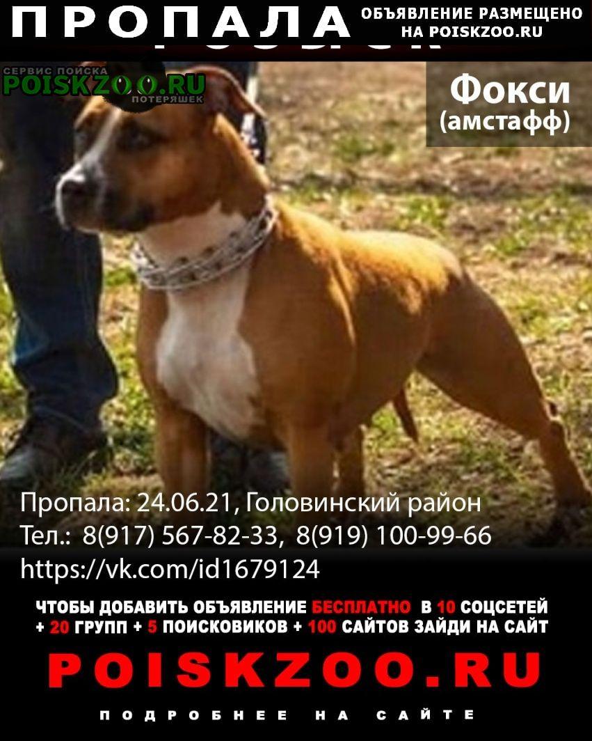 Пропала собака потерялась амстафф фокси Москва