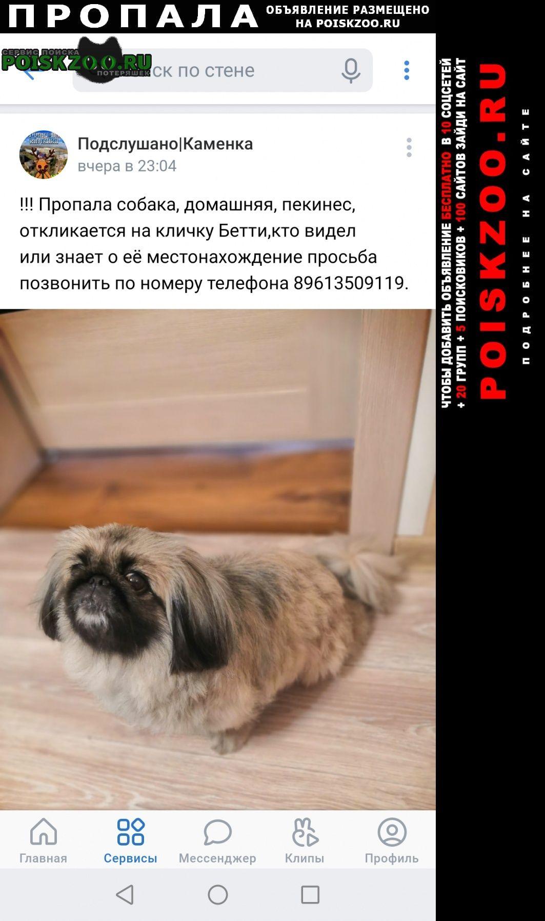 Пропала собака Каменка