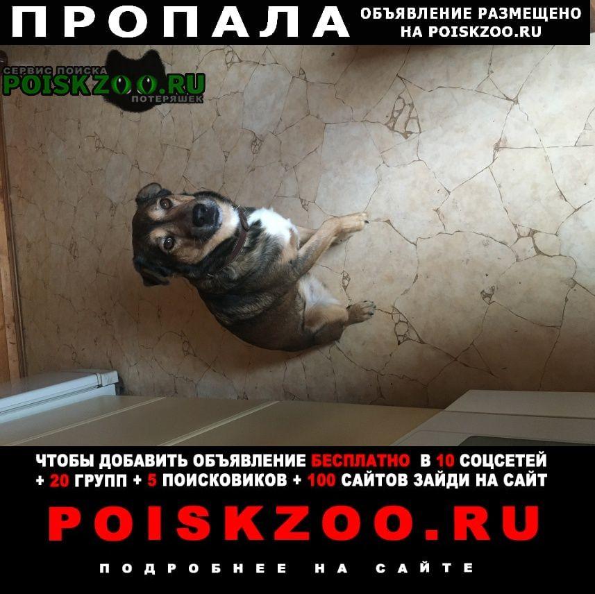Пропала собака кобель особая примета-хвостик наполовину обреза Васильевский Мох