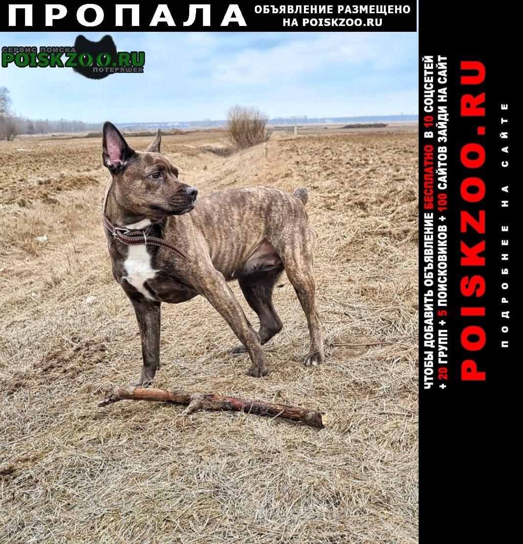 Пропала собака потерялась Санкт-Петербург