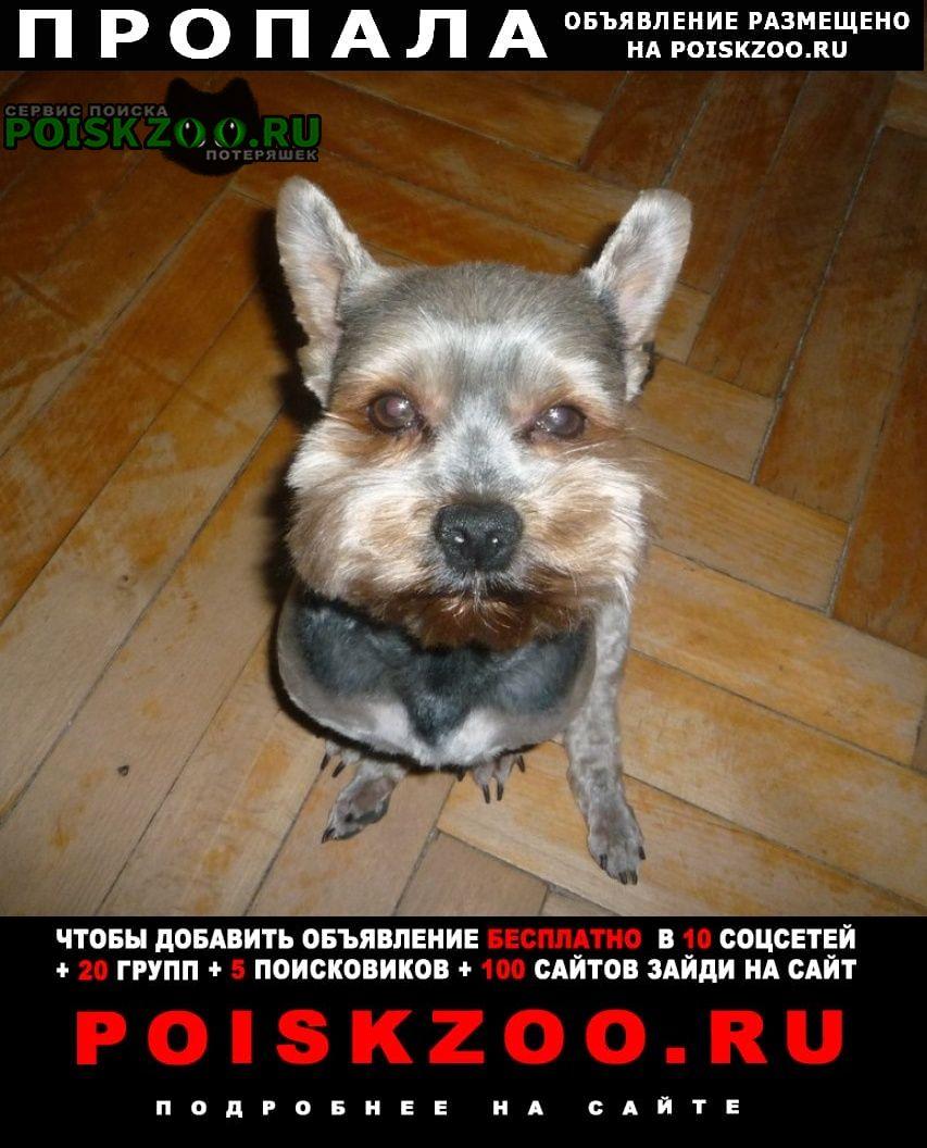 Пропала собака кобель очень надеемся найти   г.Москва