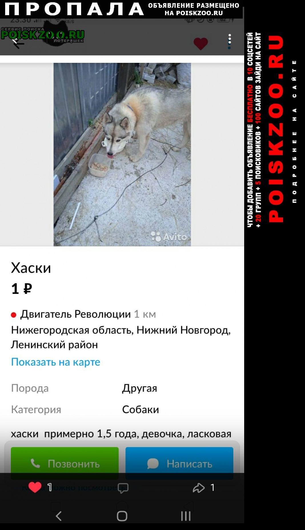 Пропала собака кличка альма. Нижний Новгород