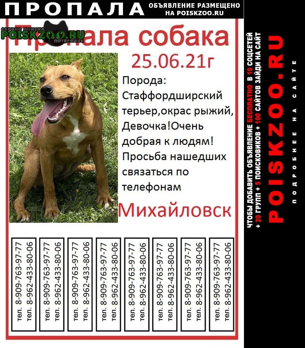 Пропала собака зовут рейчел 5 месяцев имеются документы Михайловск Ставропольский край