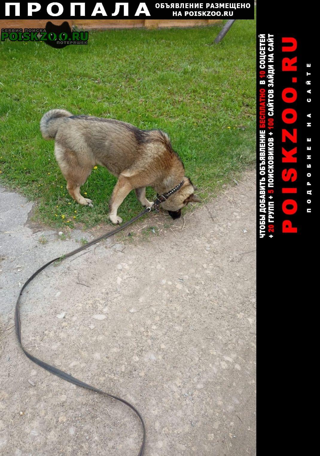 Пропала собака Тула
