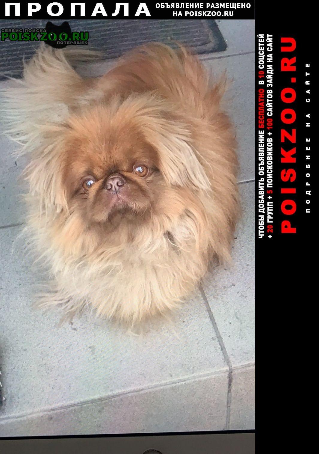 Пропала собака кобель пекинес Брянск