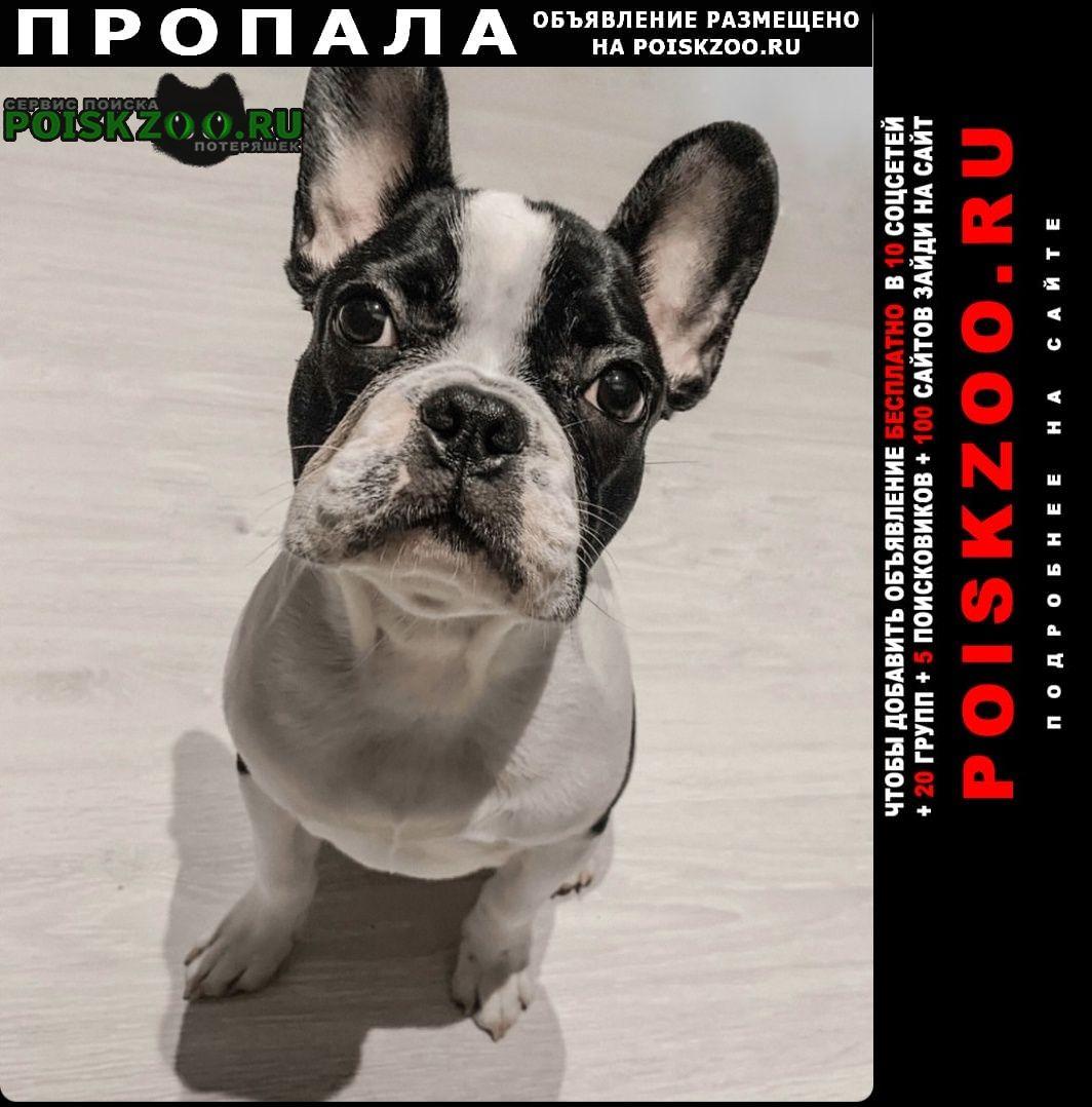 Пропала собака кобель французский бульдог Щербинка