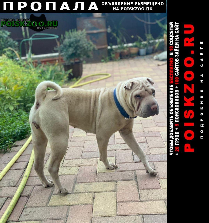 Пропала собака Сочи