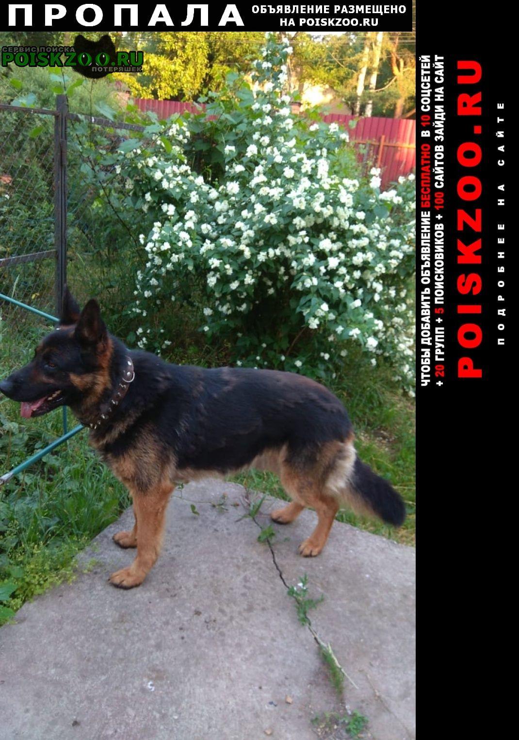 Пропала собака кобель немецкая овчарка чепрачный Малаховка