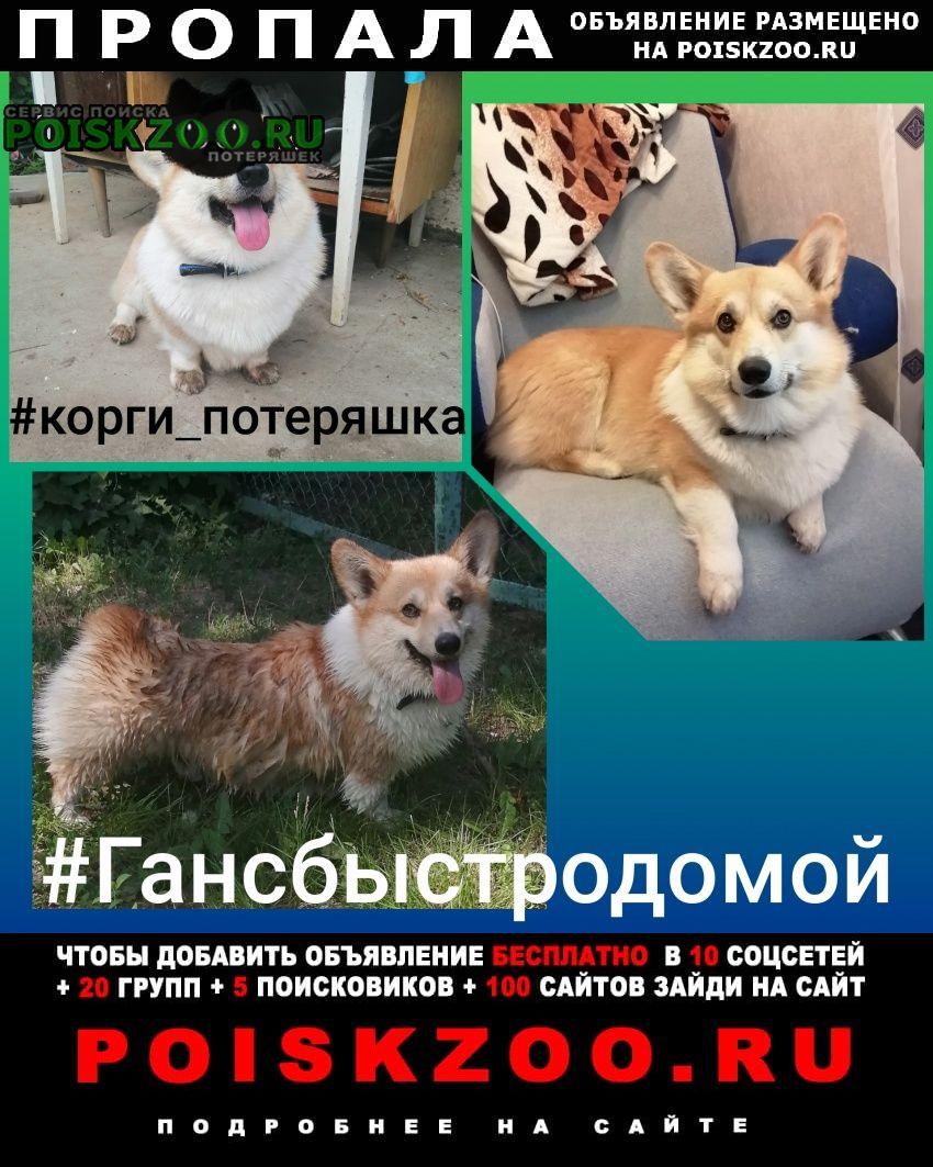 Пропала собака кобель вельш-корги из Ахтубинск