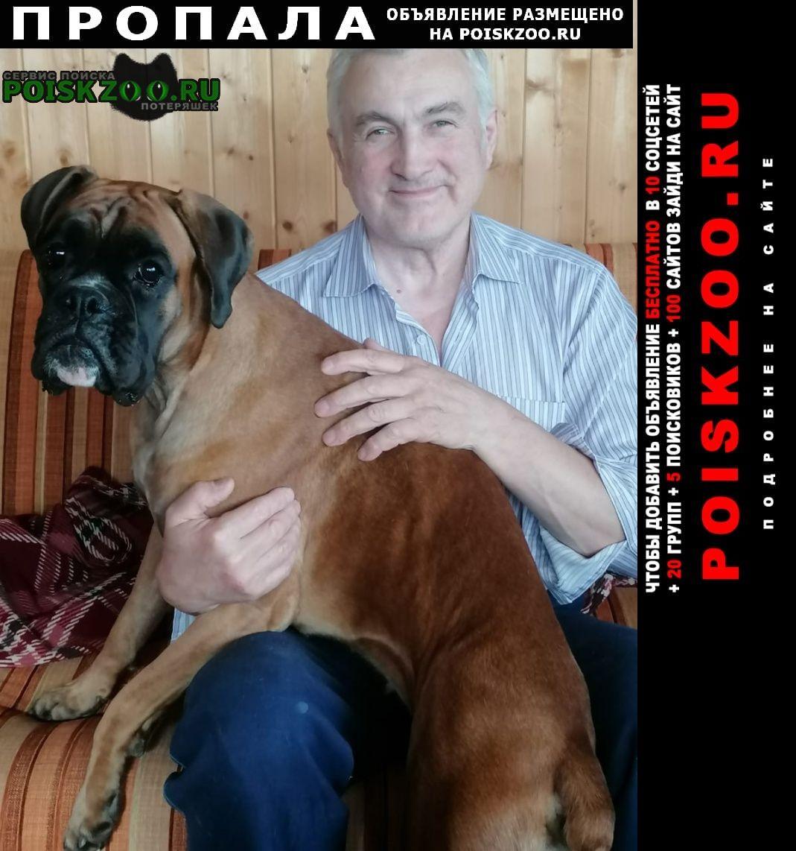 Пропала собака немецкий боксер Москва