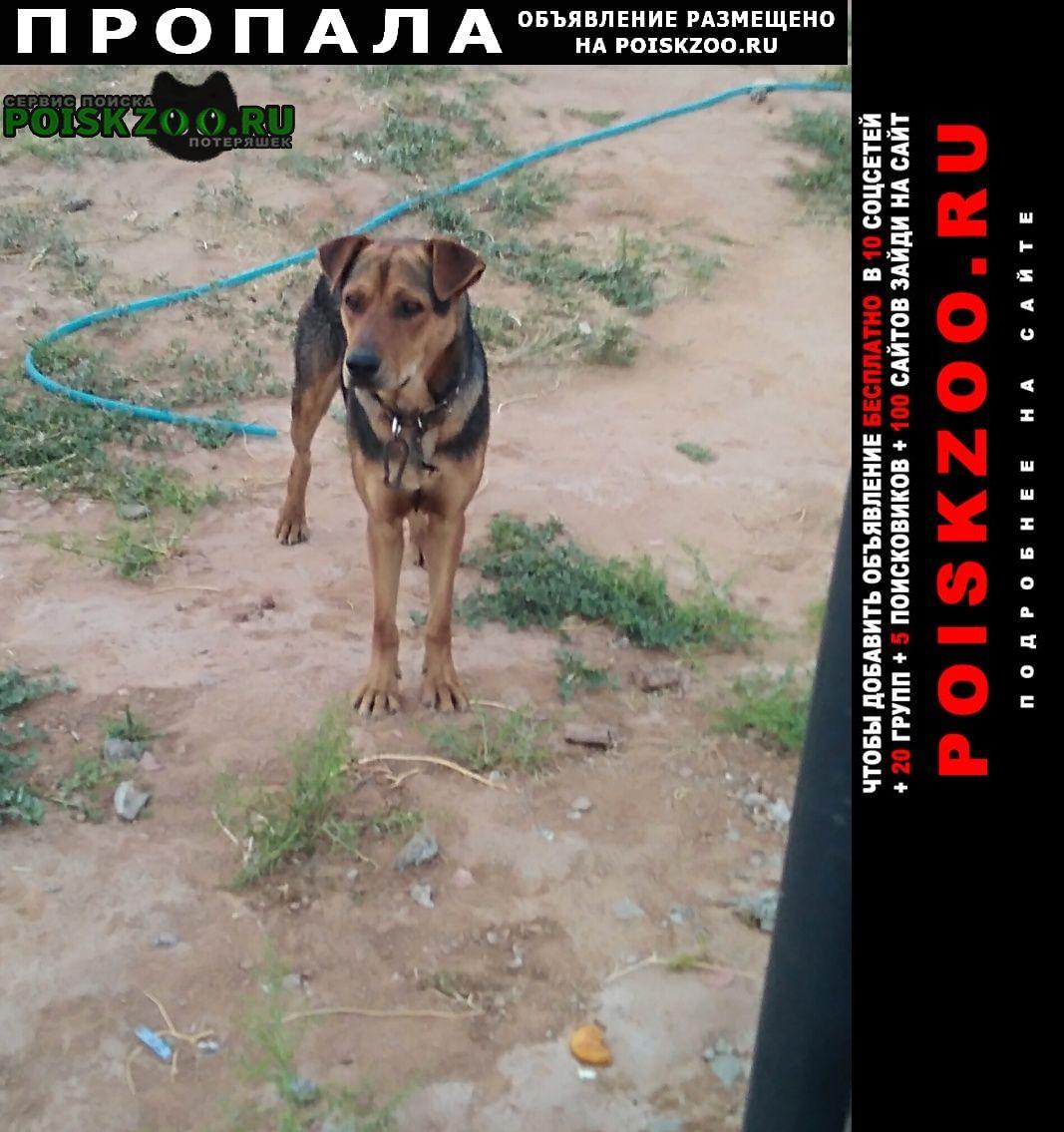 Пропала собака кобель Астрахань