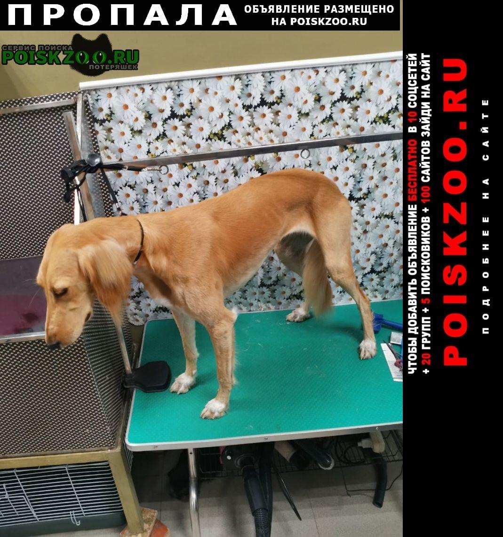 Пропала собака салюки Уфа