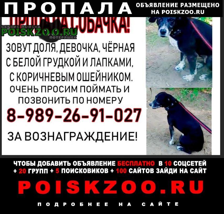 Пропала собака станица новотитаровская Краснодар