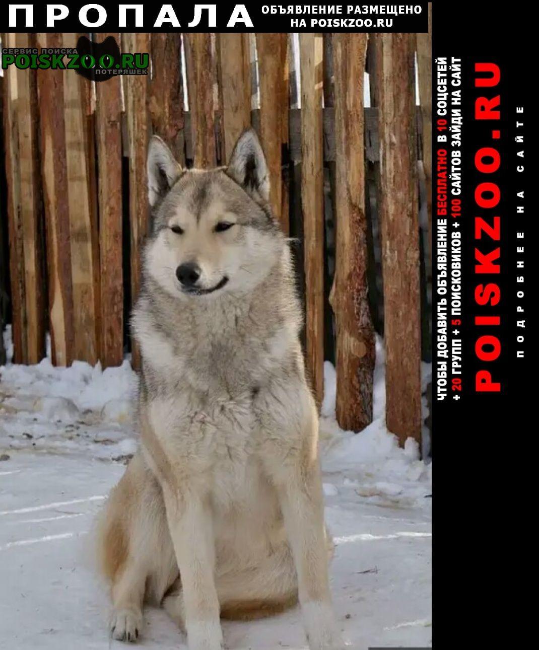 Пропала собака кобель Ульяновск