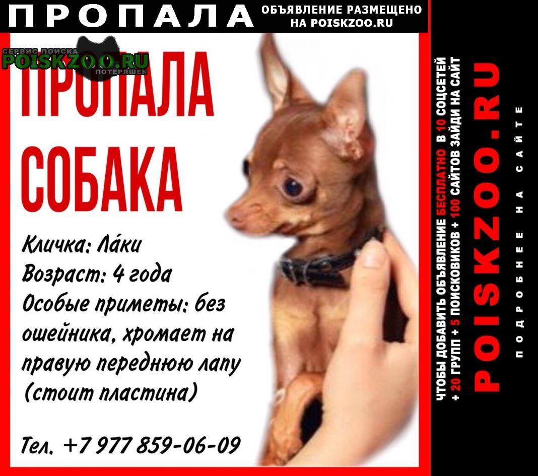 Пропала собака кобель Одинцово