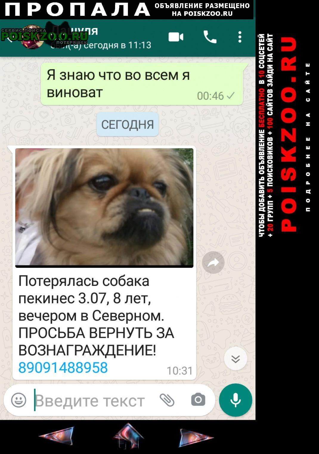 Пропала собака рыжего цвета пикинес Курган