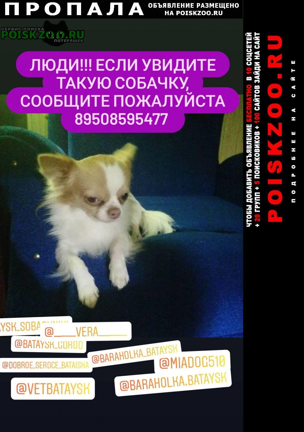 Пропала собака кобель чихуа Батайск