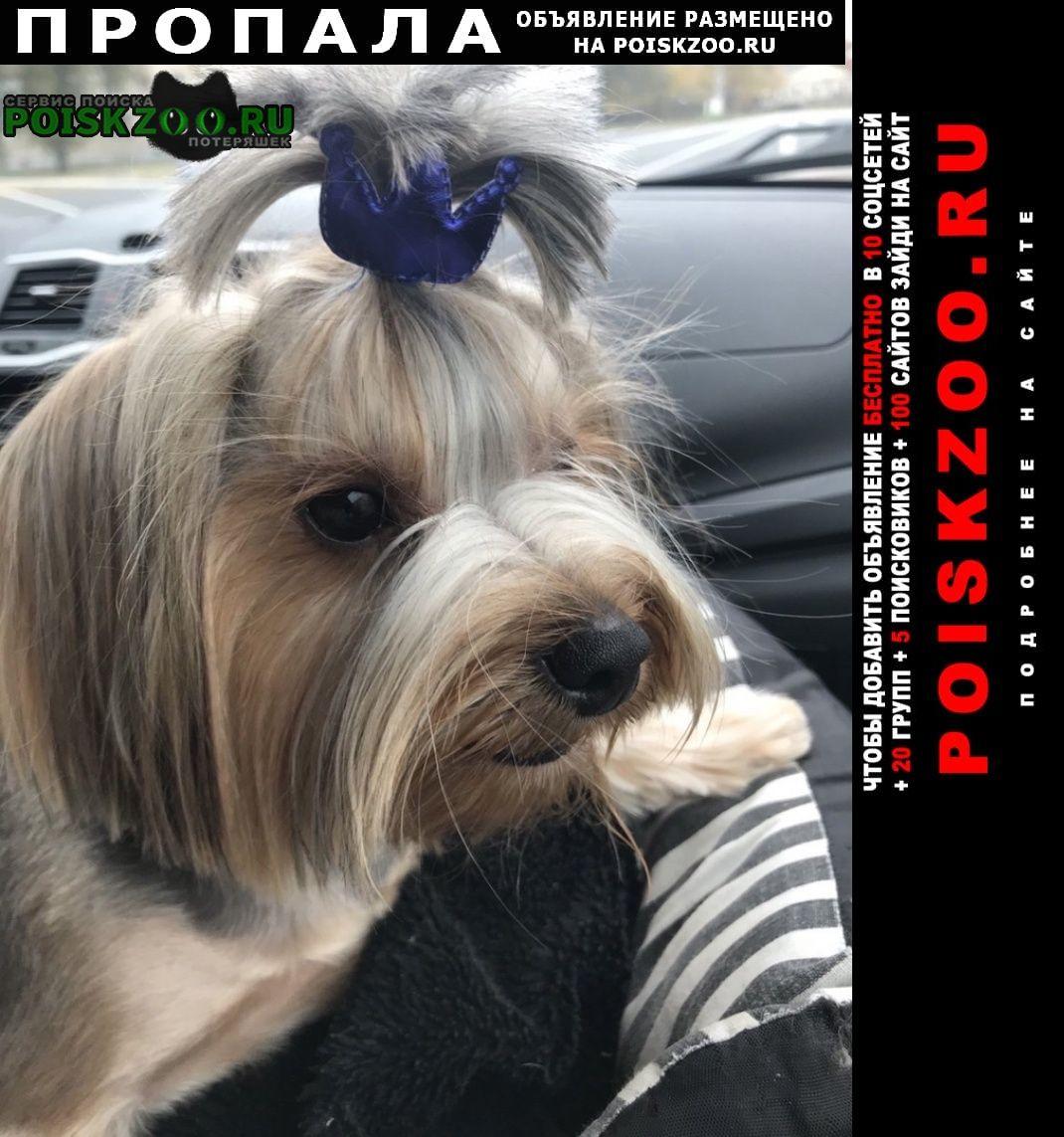 Пропала собака кобель Тольятти