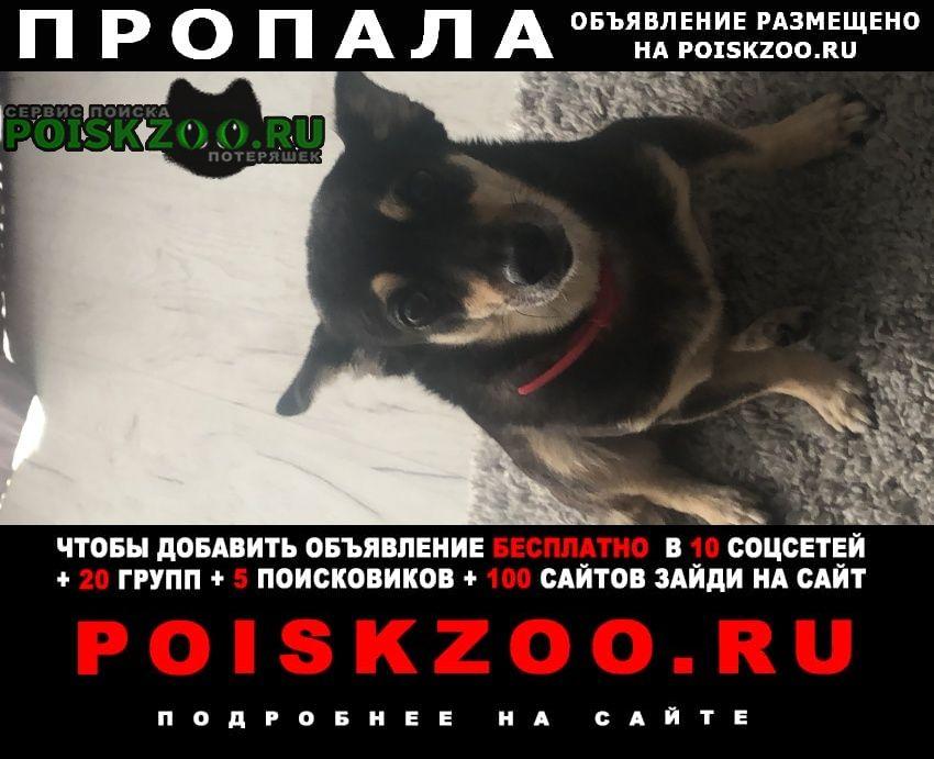 Пропала собака 04.07 в районе дагомыс Сочи