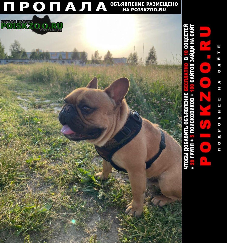 Пропала собака кобель Сергиев Посад