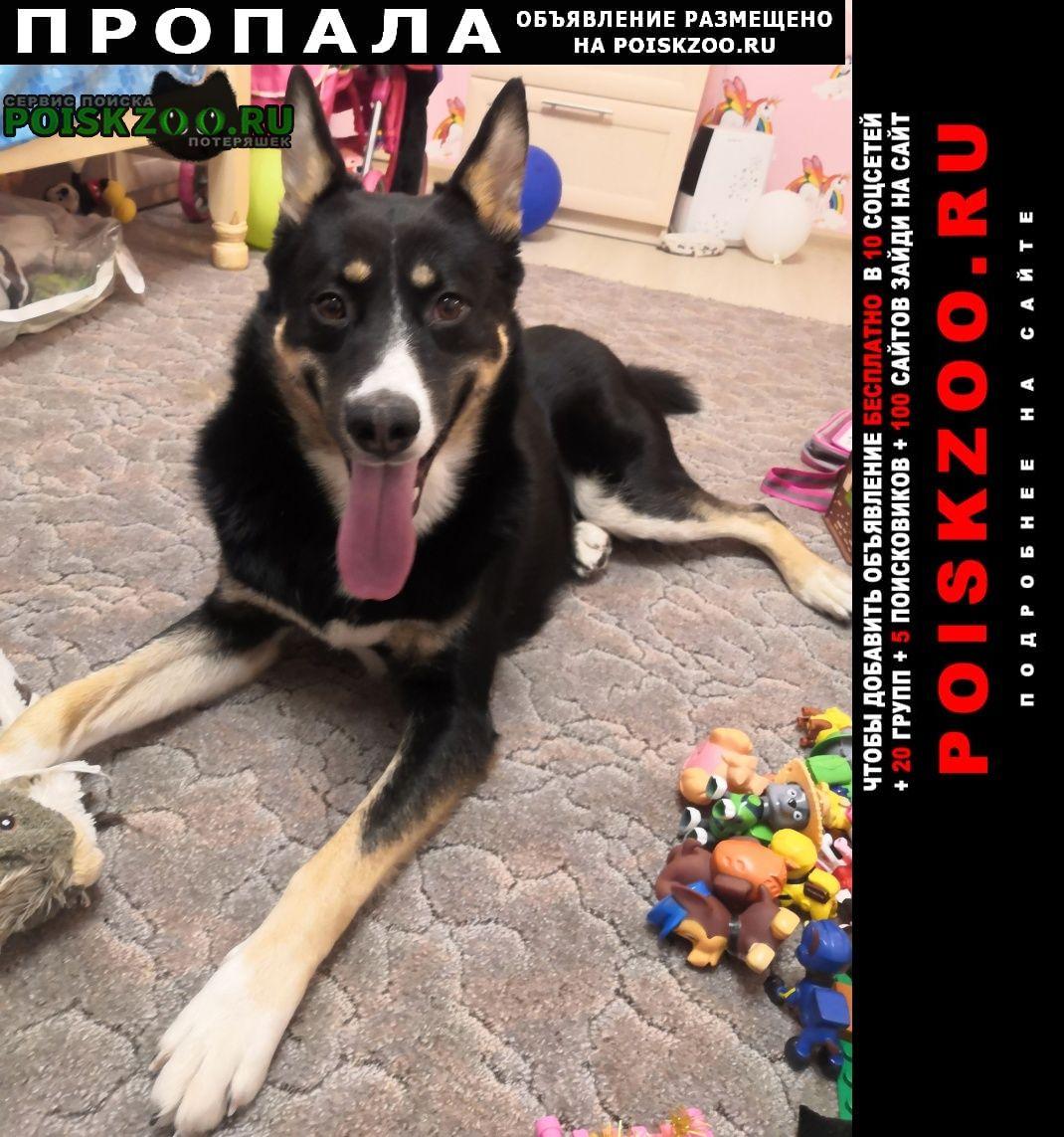 Пропала собака кобель южное бутово - щербинка Москва