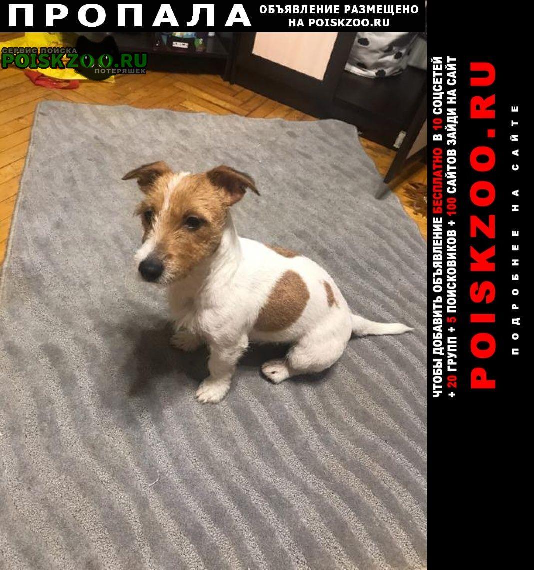Пропала собака в деревне зевалово Михнево