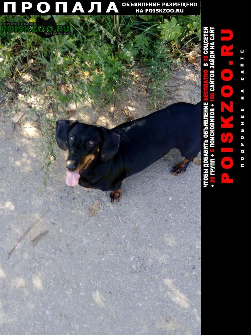 Пропала собака Владимир
