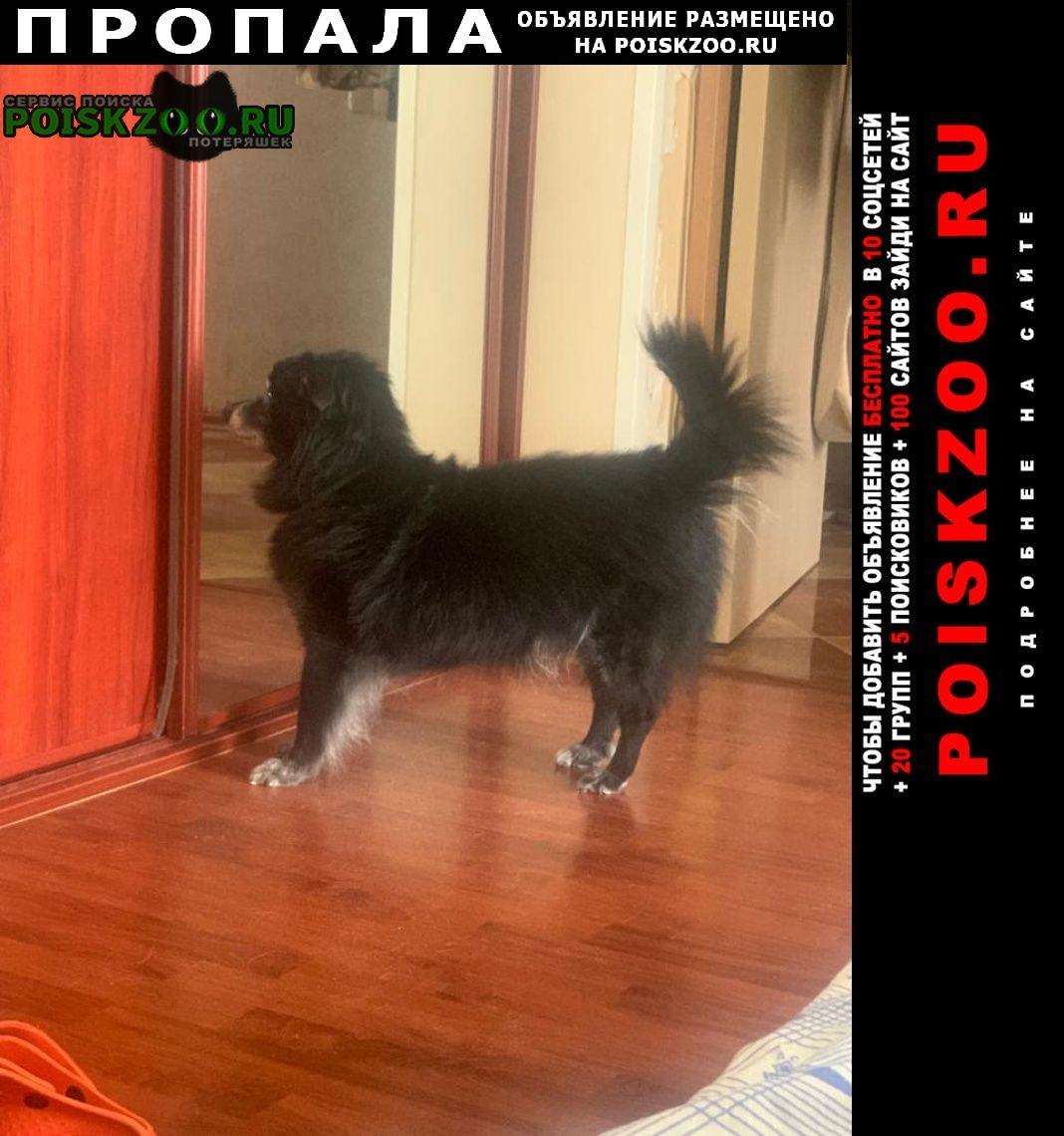 Пропала собака кобель Нелидово