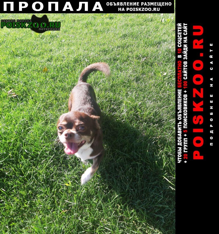 Пропала собака чихуахуа коричневого цвет Самара