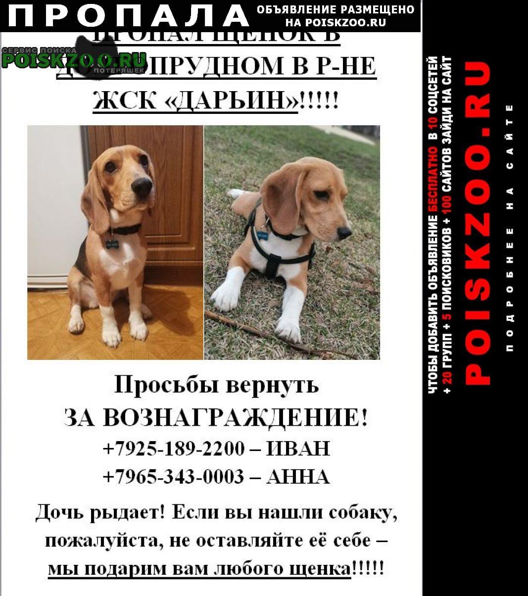 Пропала собака Долгопрудный