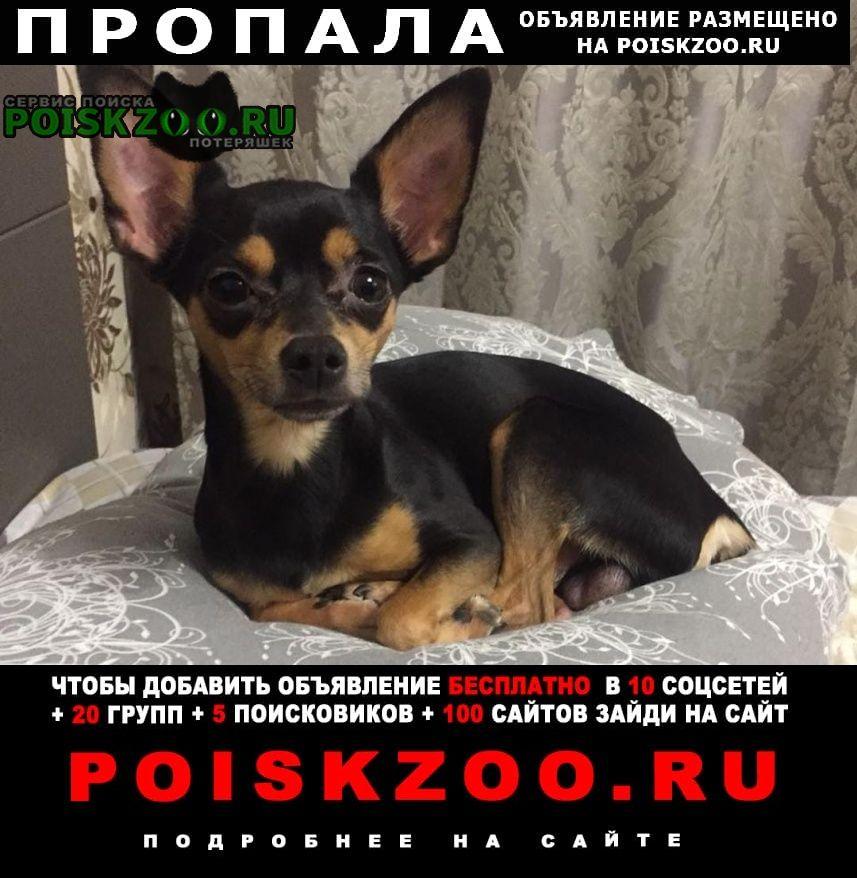 Пропала собака кобель попал тойтерьер Хабаровск