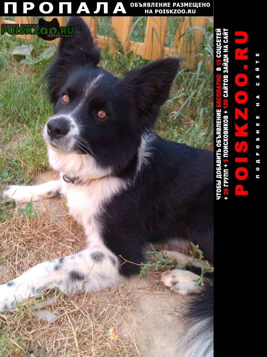 Пропала собака кобель Бронницы