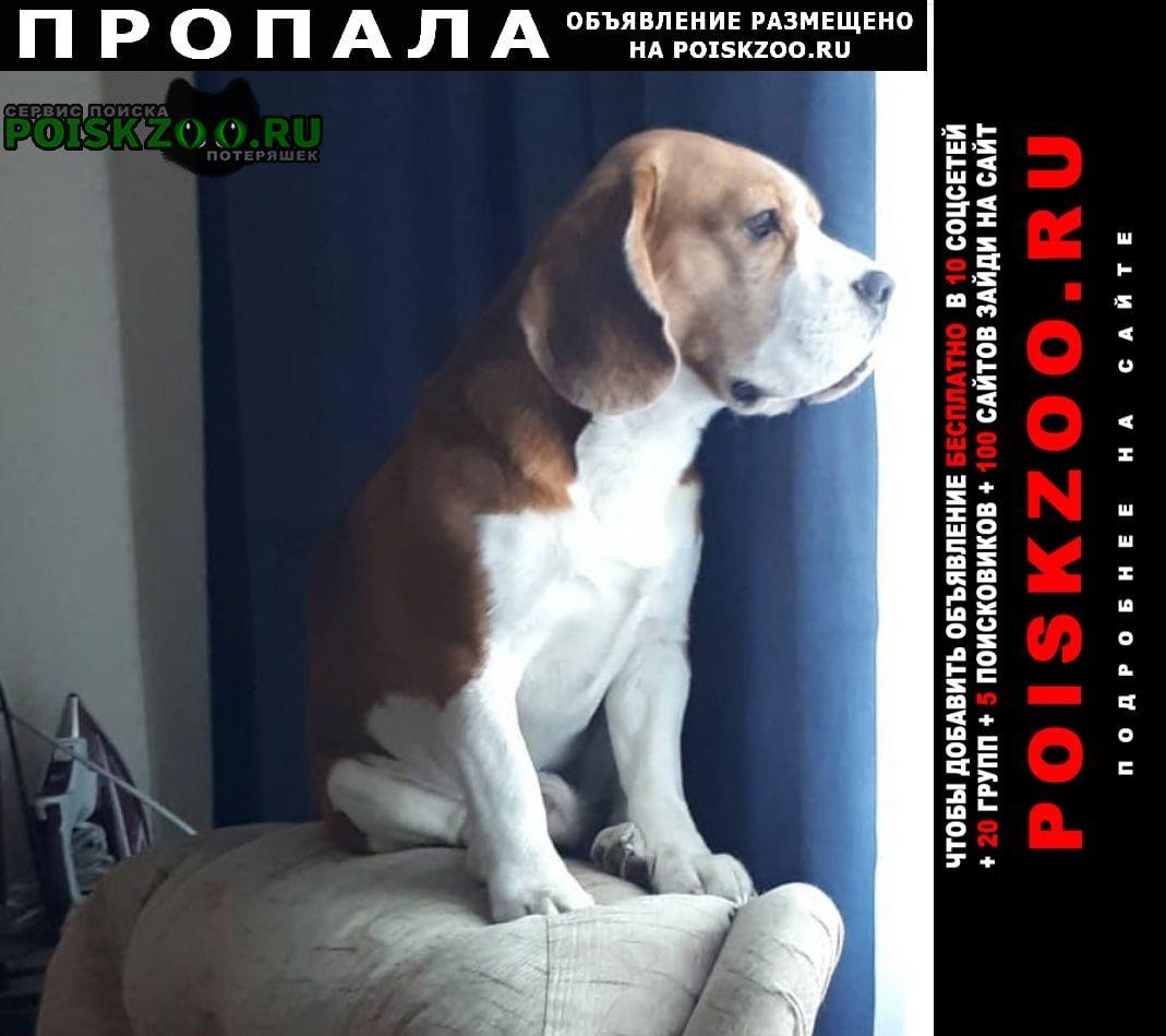 Пропала собака кобель Черепаново