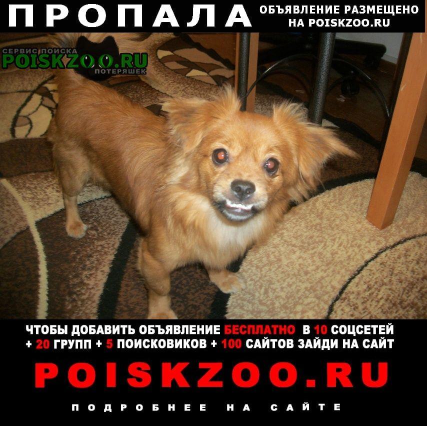 Пропала собака Иркутск